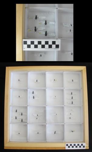 Aperçu de la collection de référence entomologique
